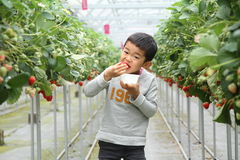 Japanese boy eating strawberry. (first grade at elementary school Stock Image