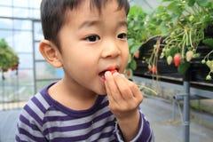 Japanese boy eating strawberry Royalty Free Stock Image