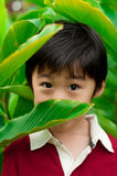 Japanese boy hides behind tropical leaf Royalty Free Stock Photography