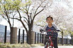 Japanese boy riding on the bicycle under cherry blossoms royalty free stock images