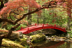Japanese Bridge. Red Japanese bridge in a tranquil setting stock photos