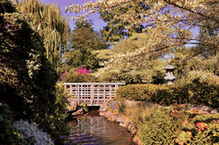 Japanese bridge inside london's regents park Stock Images