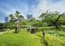 Japanese Bridge Surrounded By Beautiful Pines, Maples And Cherry Royalty Free Stock Image