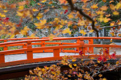 Japanese Bridge. Yellow and red maple bush tree blossom in autumn with traditional style red bridge of Okunoin mausoleum, Koyasan, Japan Stock Photos