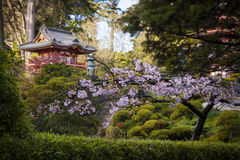 Japanese Building in garden. Stock Photography