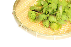 Japanese butterbur sprout on a colander Royalty Free Stock Photo