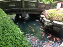 Japanese Carp Garden: Koi pond Royalty Free Stock Photos