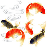 Japanese carp. I drew a carp in the technique of the Japanese traditional painting Stock Photography