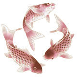 Japanese carp. I drew a carp in the technique of the Japanese traditional painting Stock Photo