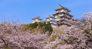 Japanese castle and Beautiful flower Stock Images