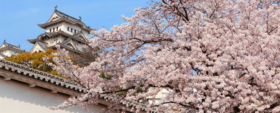 Japanese castle and Beautiful flower Stock Photos
