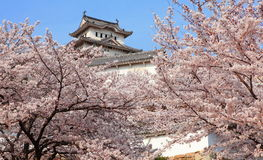Japanese castle and Beautiful flower Royalty Free Stock Photos