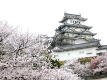 Japanese Castle during Cherry Blossom Royalty Free Stock Photography