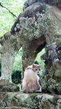 Japanese cat between legs of lion statue Stock Photos