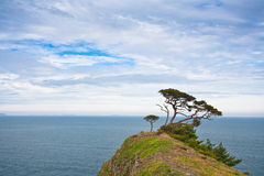 Japanese cedar on top Royalty Free Stock Image