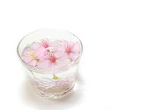 Japanese cherry blossom flowers in the glass of water #2 Stock Photography