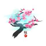 Japanese Cherry Blossom Tree. Vector illustration Stock Image