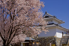 Japanese Cherry Blossoms. Traditional building in background Stock Photo