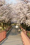 The Japanese cherry mall Stock Image