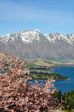 Japanese cherry & Mountains. Taken at Queenstown New Zealand stock image
