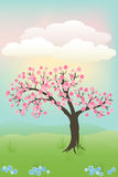 Japanese cherry tree Stock Images