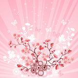 Japanese cherry tree Stock Photography