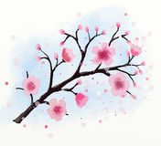 Japanese cherry tree blossom watercolor Royalty Free Stock Photos