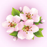 Japanese cherry tree, blossoming branch of sakura. Beautiful cherry blossom,  on pink background. Stylish floral wallpaper. Vector illustration Royalty Free Stock Photo