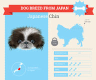 Japanese Chin Dog breed  infographics. Stock Image