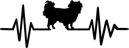 Japanese Chin heartbeat Stock Photo