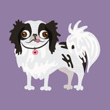 Japanese Chin. Vector illustration of a dog. Royalty Free Stock Photo