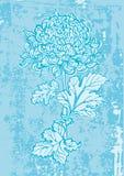 Japanese chrysanthemum flower Royalty Free Stock Photos