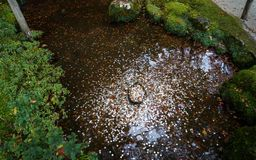 Japanese coins in a wishing well of the temple stock photography