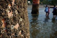 Japanese coins (Yens, JPY) sticked to the wooden pole of Myiajima gate (Itsukushima giant torii) Stock Image
