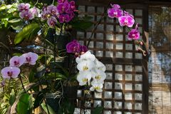 Japanese concept indoor wall decoration with orchids. Interior design concept stock photography