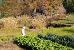 Japanese country life Stock Photography