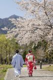 Japanese couple in traditional clothes stroll under flowering trees, Kawaguchi, Japan royalty free stock images