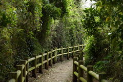 Japanese courtyard. The path in the Japanese garden Stock Photos