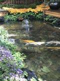 Japanese Coy Pond, Bellagio Hotel, Las Vegas. Nevada stock image