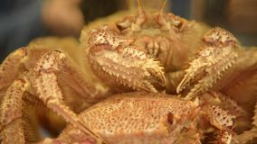 Japanese crab stock video