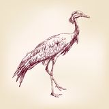 Japanese crane hand drawn vector llustration Stock Photos