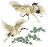 Japanese crane. I drew a crane in Japanese technique Stock Photography