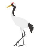 Japanese Crane Royalty Free Stock Image