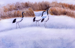Japanese crane in winter Royalty Free Stock Images