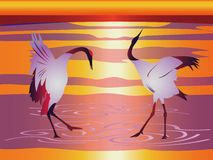 Japanese cranes. Two Japanese cranes with red crowns are involved in a mating dance ritual Royalty Free Stock Photo