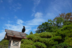 Japanese crow on a lantern Royalty Free Stock Image