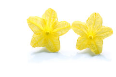 Japanese cucumber flower couple. In white Stock Photo