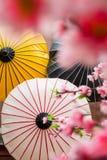 Japanese decoration background. With blossom sakura and umbrella stock image