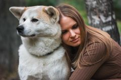 Japanese dog Akita inu portrait with young woman outdoors stock photography