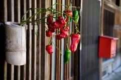 Japanese door plant decoration Stock Photo